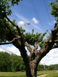 Proper care and maintenance of trees